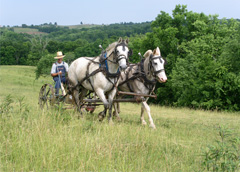 clipping_pasture_with_draft_horses